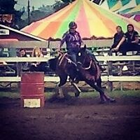 4 year old kid/husband safe mare for sale