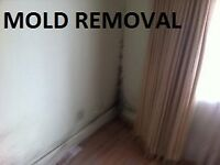 Professional mold removal and remediation