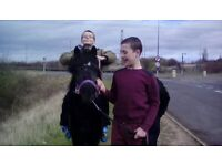 childs pony black welsh cob x mare