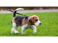 Dog Walking, Dog Boarding & Pet Sitting Services.