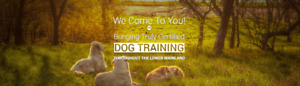 NEED A DOG TRAINER?MOBILE EVERYWHERE GVRD
