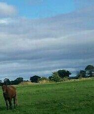 Pony livery