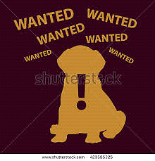 Wanted small give away puppy George Town George Town Area Preview