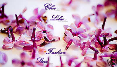 Chic Lilac