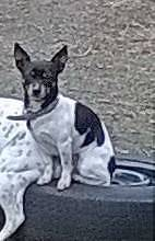 LOST /MISSING $500 REWARD OFFERED Doyalson Wyong Area Preview
