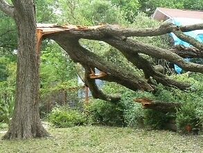 Full Tree Removal/Insured/Free Quotes