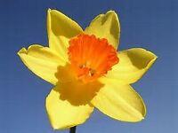 Springtime Massage
