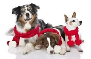 Birchview Dog Boarding -just 30 mins from south end of Cambridge Cambridge Kitchener Area image 5