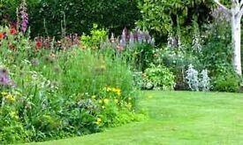 stephen mitchell garden design and construction