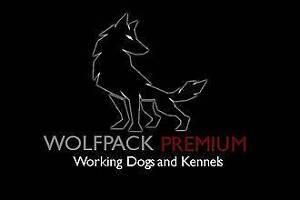 Wolfpack Premium Sydney City Inner Sydney Preview