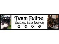 Cat Sitting - Glasgow East