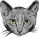 spy-cat1