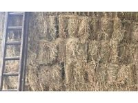 HAY BALES Small bales of well saved good quality June 2016 hay