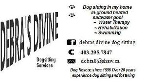 Dog Sitting, Water Rehabilition Therapy Services""
