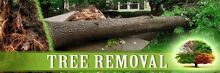 TREE LOPPING. STUMP GRINDING. MULCHING Cherrybrook Hornsby Area Preview