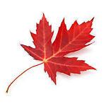Maple Leaf Postcards