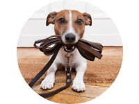 Dog Walking Service (Rathfriland Area) From £3