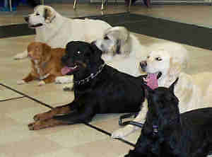 Dog Obedience & Agility Classes
