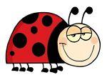 Ladybug Closet