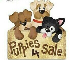 Looking to buy a Dog!!