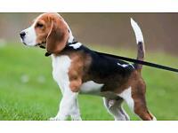 Dog walker for hire