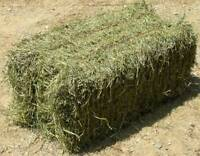 Hay Square Bales Sherwood Park Ardrossan Cooking Lake Area-SOLD