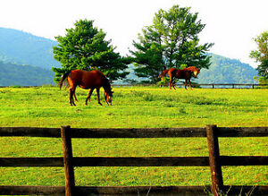 Looking for pasture board