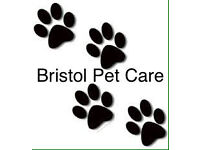Experienced Pet sitter and Cat sitter - available in Bristol area