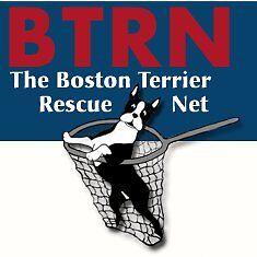 Boston Terrier Rescue Net