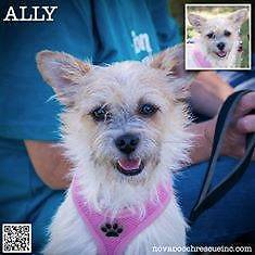 Ally - Small Female Terrier Mix Metford Maitland Area Preview