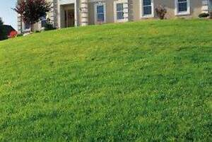 SUPER MOW  - Lawn Mowing Service Ipswich Ipswich City Preview