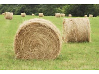 Round hay bales wanted.