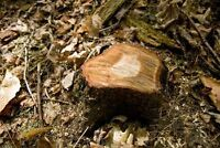 AFFORDABLE SMALL TREE AND STUMP REMOVAL GTA IN AND OUT.