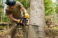 Offering tree cutting service
