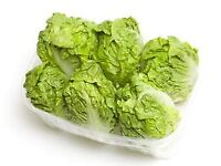 Lettuce Little Gem - Growing in 7cm Pot –Full of Flavour - Cut and Come - 50p each