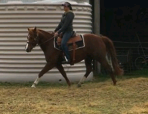 Perfect project Horse Inverell Inverell Area Preview