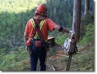 Looking for forestry experience