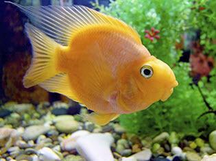 Fische & Aquarien