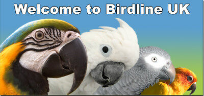Birdline-UK Ltd