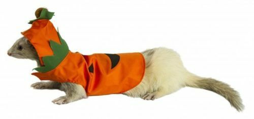 Pumpkin Patch Costume for Ferrets - Marshall Pet