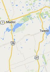 Dog Walker and Pet Sitter in the Tweed and Madoc areas Belleville Belleville Area image 1