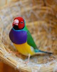Canary, Parrots and Finches from $4.00 Valley View Salisbury Area Preview
