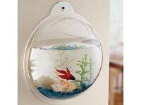 Wall hanging fish tanks BRAND NEW !!!