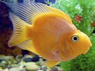 Aquarienzubehör