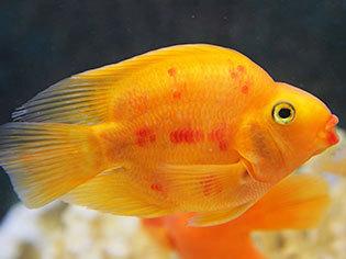 Fish Supplies & Aquariums