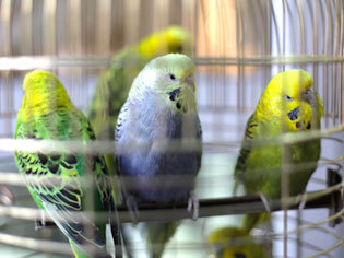 Vogelzubehör