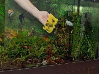 große fische fürs aquarium