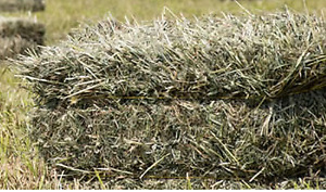 Small square hay bales - approx 40 lb