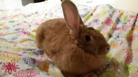 Bunnies Available for Adoption!