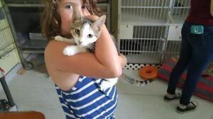 "Baby Male Cat - Tabby: ""Tatum"""